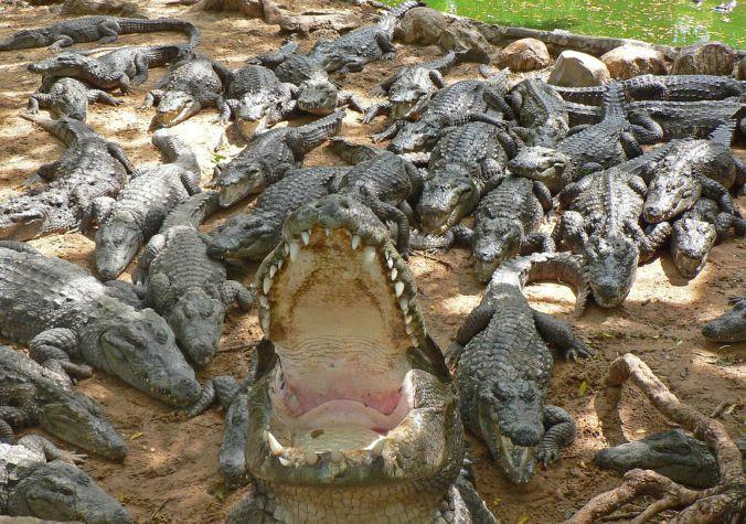 drain. the. swamp.